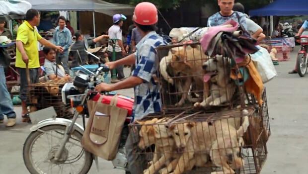 Sosyal medya Yulin Köpek Festivali'ni durdurmak için kenetlendi