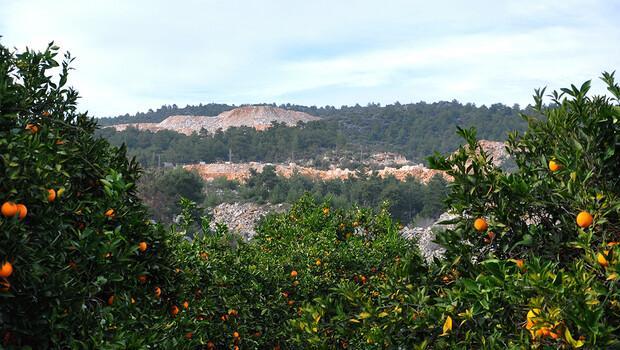 Finike portakalı tehlike altında