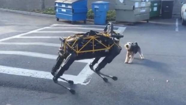 Gerçek köpek robota karşı