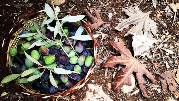 Slow Olive için geri sayım başladı