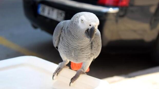 Kuyumcu esnafının neşeti; Papağan Şakir