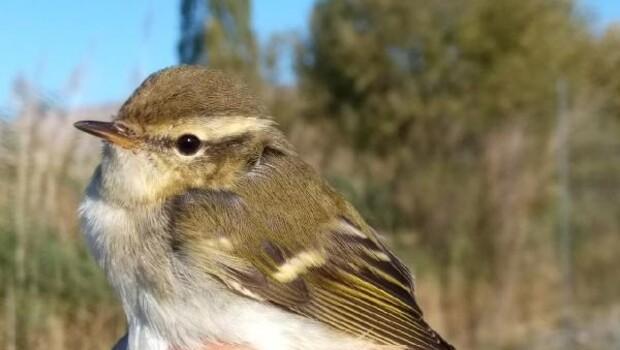 Kuş Cennetinde 270inci kuş türü halkalandı