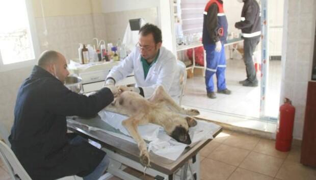 2016da 2 bin 500 hayvan tedavi edildi