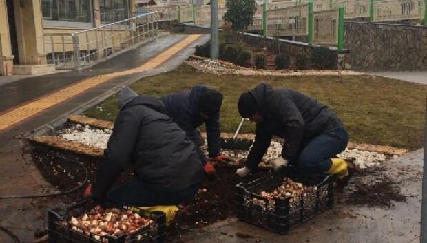 Kiliste çiçek tohumları ekiliyor