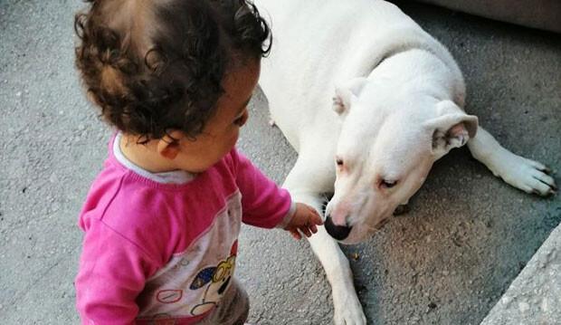 'Havlıyor' diye köpeği katletti, sözleri çileden çıkardı