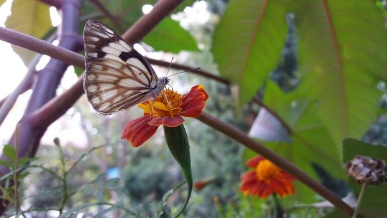 Nihat Kaymaz: Taksici olmasaydım kelebek çekemezdim