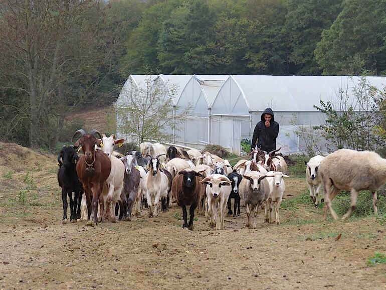 İyi gelmez mi hiç çiftlik havası