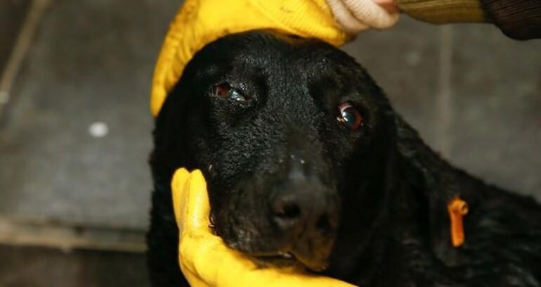 Şehit polisin köpeği oradan hiç ayrılmıyor