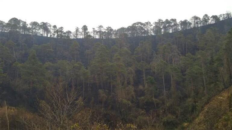 Sürmenedeki orman yangını söndürüldü, üzücü manzara ortaya çıktı