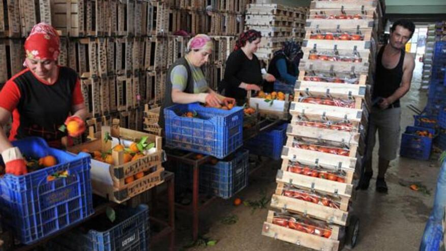 Türk sebze meyvesi iki haftada Rusya'da raflardaki yerini alabilir