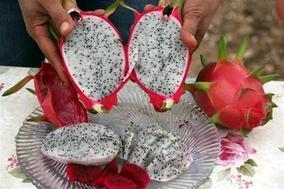 Bu meyvenin tanesi 16 liradan satılıyor
