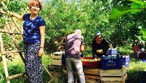 Elma üreticisi köylülere çevrecilerden hasat desteği