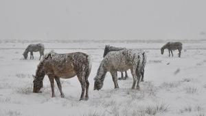 Karda aç kalan yaban hayvanları unutulmadı