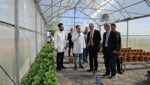 Ahi Evran Üniversitesi'nde topraksız tarım serası kuruldu