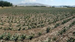 Korkutelide tarım arazilerini dolu yağışı vurdu