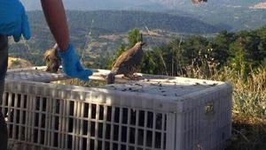 Boluda 500 keklik doğaya salındı