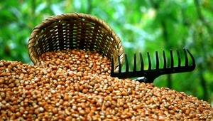 Sevinç: Fındığı gıda sektöründe değerlendirmeliyiz