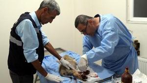 Sürücünün çarpıp, yaraladığı köpek barınakta tedaviye alındı