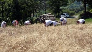 Sanal tarla oyunları yerine gerçek tarlada buğday ekip, ekmek yaptılar