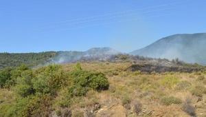Erdekte 10 hektar zeytinlik yandı