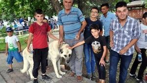 Acıgöllüler, çöp kamyonunda köpek katliamı iddiasına tepki gösterdi