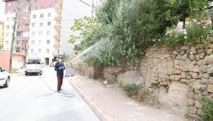 Belediyeden sarıkız örümceği mücadelesi