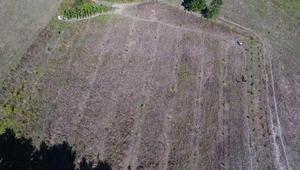Sinopta bahçedeki 33 ceviz fidanını kestiler