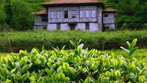 Faruk Çelik: Organik çaya bir an önce geçilmezse başka sorunlar çıkabilir