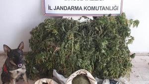 Bingöl'de 158 kilo esrar ele geçirildi