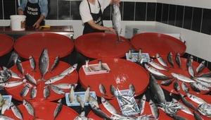 Giresunda standart altı balık avlanıyor tepkisi