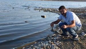 Porsuk Barajında balık ve kerevit ölümleri (2)