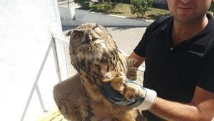 Yaralı yaban kuşları tedavi altına alındı