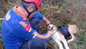 Uçurumda mahsur kalan köpeği AFAD kurtardı
