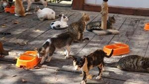 Kasabadaki kediler, Mozartın Türk Marşı ile yemek yiyor
