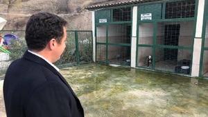 Başkan Bakıcı hayvan barınağını ziyaret etti