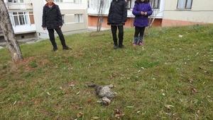 Çorumda patileri kesilmiş yavru kedi, ölü bulundu