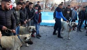 Ardahanda Hollanda'ya çoban köpekli protesto