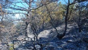 Kastamonuda 10 hektar orman alanı yandı