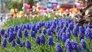 Giresun çiçeklerle renklendi