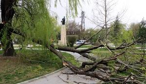 Erzincanda şiddeti rüzgarda çatılar uçtu, ağaçlar devrildi