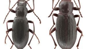 Vanda keşfedilen böceği Ege Üniversitesi adı verildi