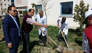 Iğdır Devlet Hastanesinde Ağaçlandırma