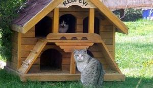 Nevşehir sokaklarında kedi evleri