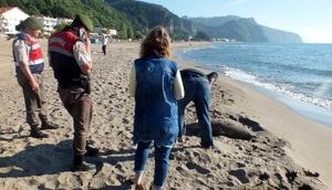 Bartında 2 ölü yunus sahile vurdu