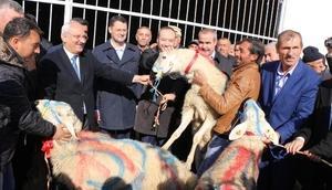Kırıkkalede damızlık koyun ve koç dağıtıldı