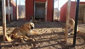 Mardinde bin sokak hayvanı tedavi edildi