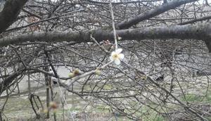 Bartında ağaçlar çiçek açtı