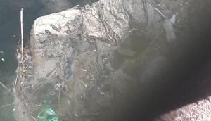 Konyada başı ve kolu kesik kadın cesedi bulundu