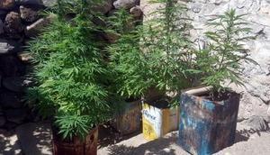 Nevşehirde uyuşturucu operasyonu