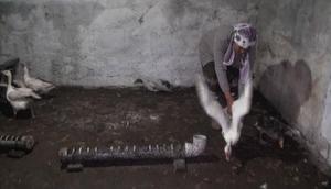 Kars'ta 1500 kaz telef oldu